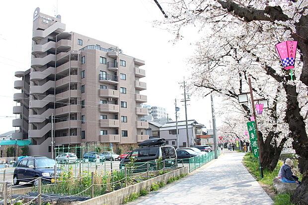 シャトレ愛松岩倉